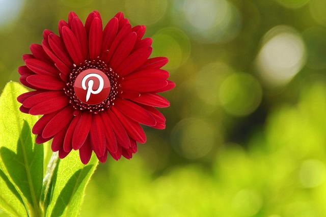 pinterest cvetic